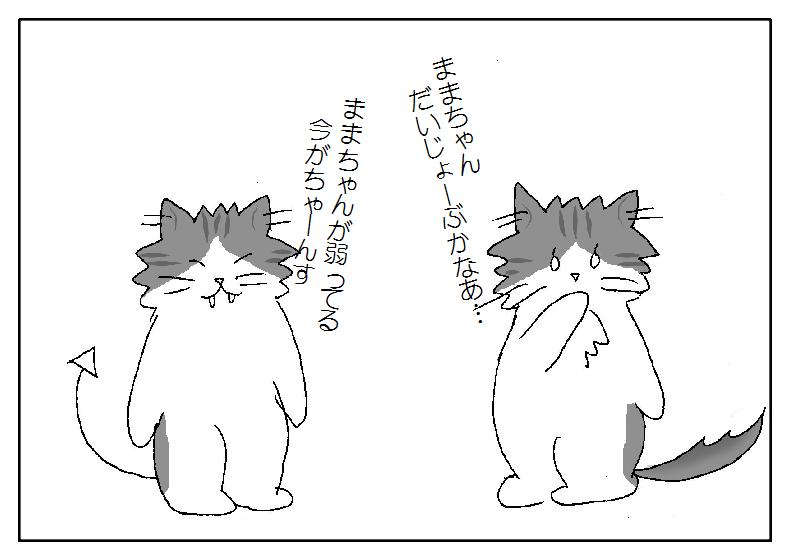 猫 社会的行動
