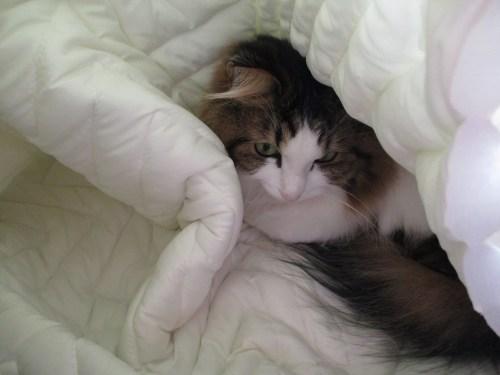 猫が狭い所を好む理由