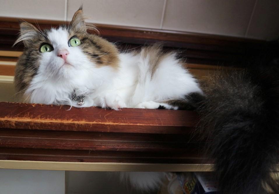 イギリス 首相官邸猫 ラリー ネズミ取り 公務