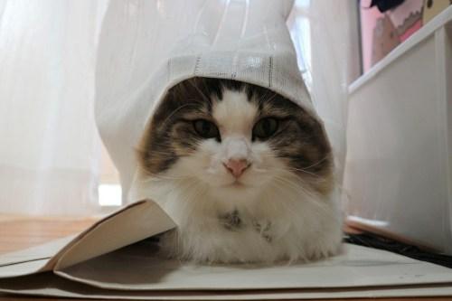 世界猫の日 猫が好きな理由 イスラムの人は猫好き