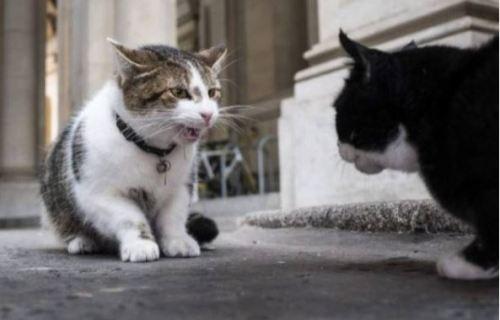 首相官邸猫 ラリー 喧嘩 公務