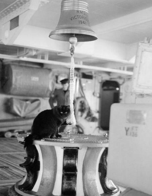 Tiddles ティドルズ イギリス海軍空母の船の猫