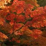 待ちに待った秋の紅葉!関西のおすすめドライブデートスポット♪