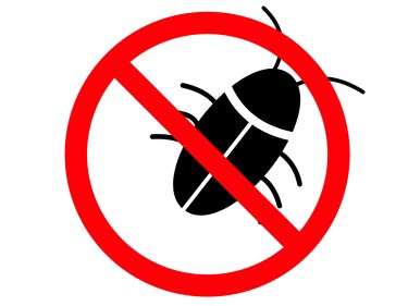 冬の間ゴキブリはどこにいる?死んじゃうそれとも冬眠する?駆除方法や対策法も紹介