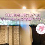 【注文住宅日記10/10】ポトスちゃんが増殖中です!