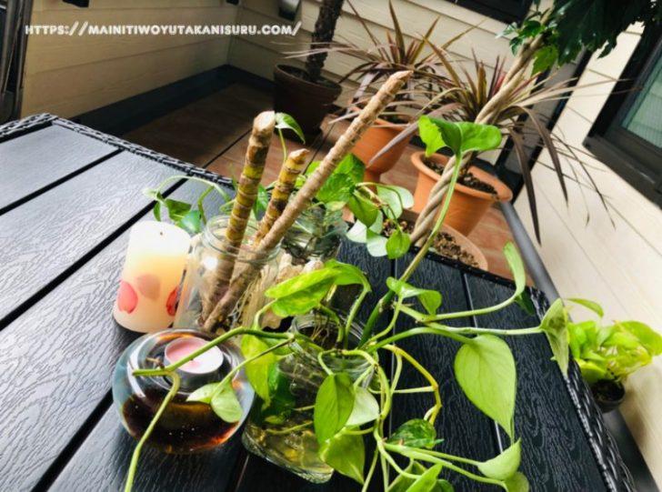 【注文住宅日記10/24】植物のことまとめ