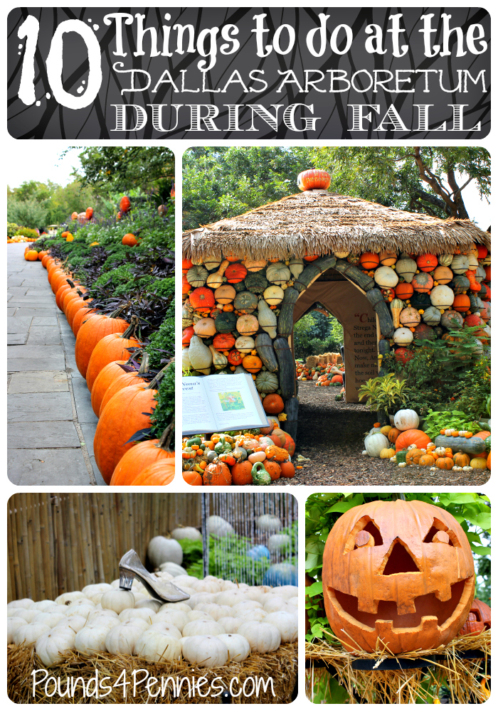 10 Things to do Dallas Arboretum This fall