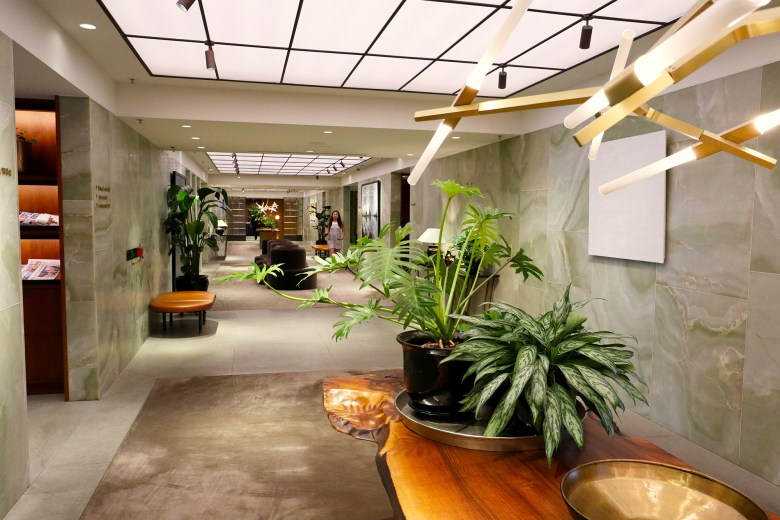Corridor Plant.jpg
