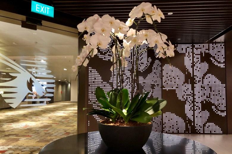 Entrance Orchid