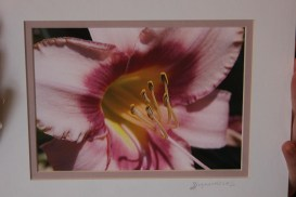 Matted photography by Susan Hiles.