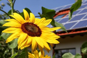 Everything that Virginians Need to Know about How Solar Panels Work