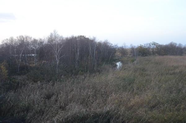 Buitendijks hoogveen