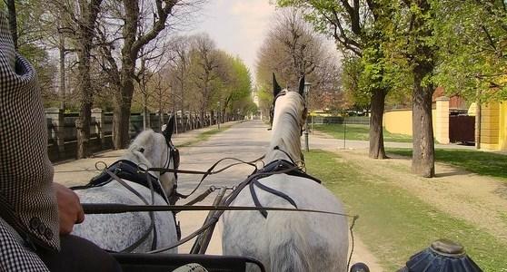 Balade commentée du Parc du château en calèche 06.09.2019