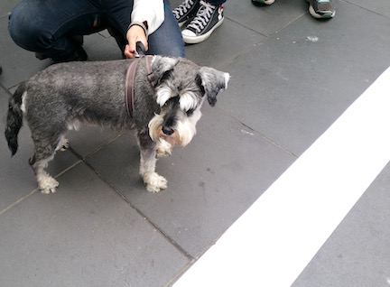CSIRO RALLY DOG AND PETITION