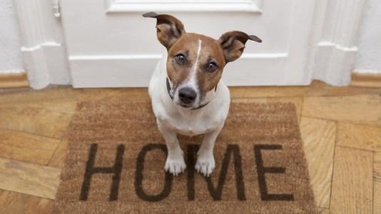 Razones y beneficios de tener un perro en casa
