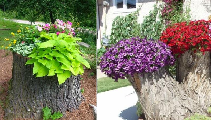 une souche d arbre de votre jardin