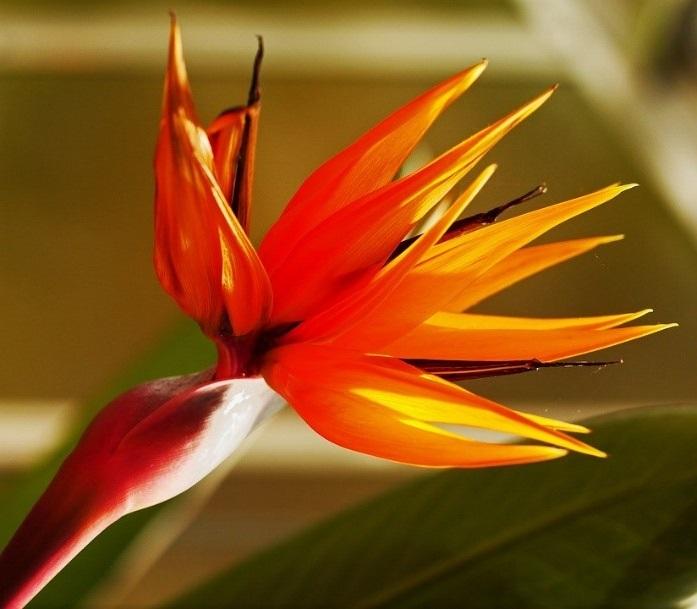 fleurs exotiques la liste des 25 plus
