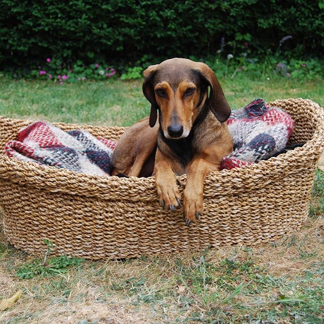 Hogla dog basket in today's Sunday Times Home section