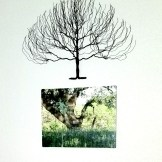801 tree canvas (edited-Pixlr)