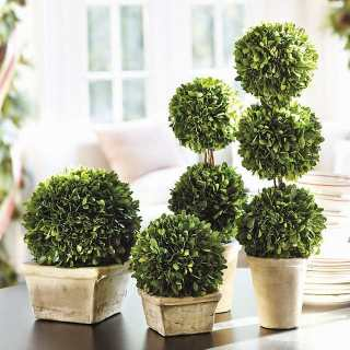 Assortment of preserved boxwoods
