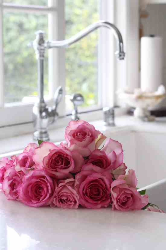 passion-pink-roses