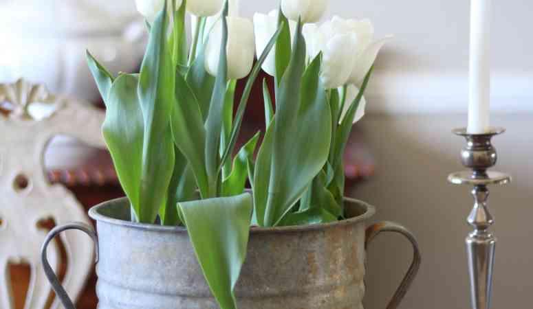 tulips-spring-decor