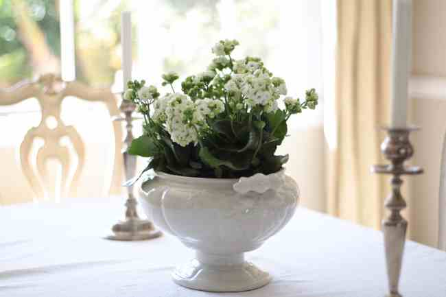 kalanchoe-decorating-flowers
