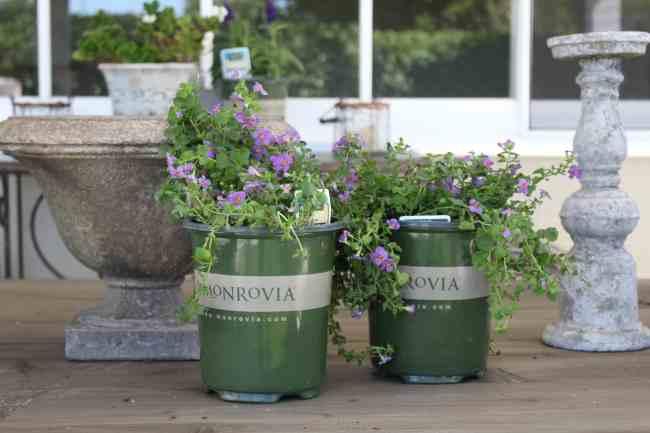 monrovia-plants-backyard-refresh