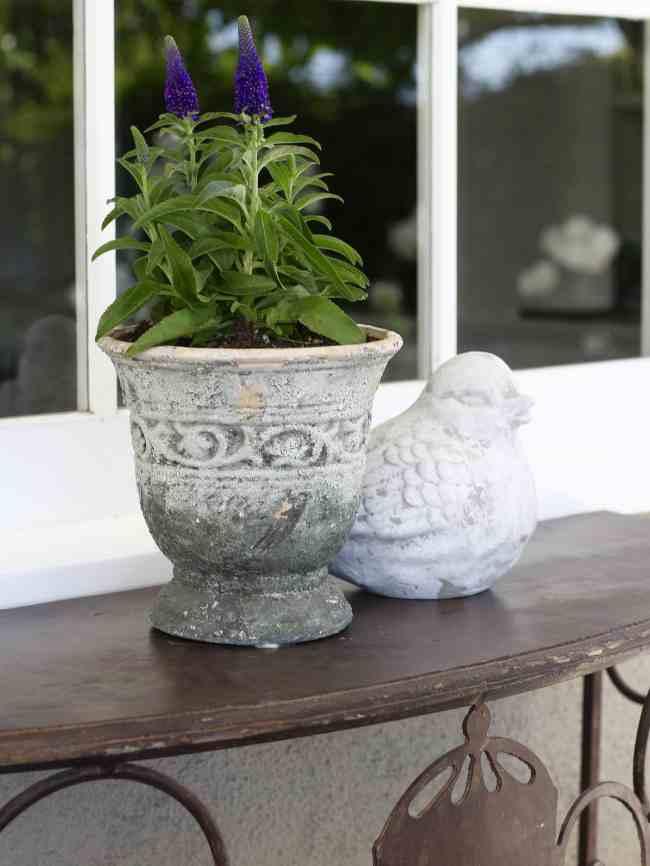 purple-flowers-aged-pot-backyard-refresh-2