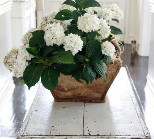 Decorating with White Hydrangeas – My Favorite Flower!