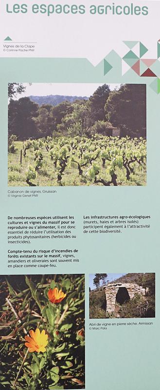 La Clape et ses milieux - espaces agricoles
