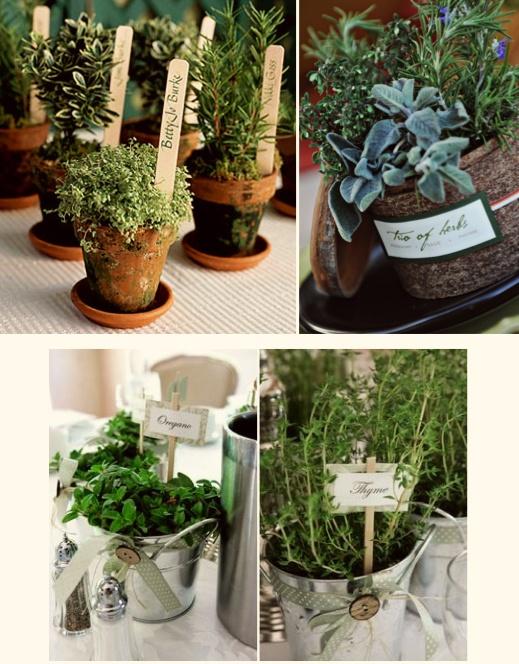 Petits pots de thym, romarin, sauge, et autres variétés en cadeau
