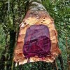 rosewood-tree