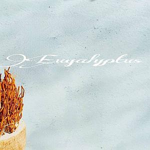 Eucalyptus Beton Ciré wand