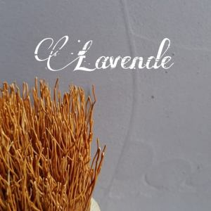 Lavendel Beton Ciré wand