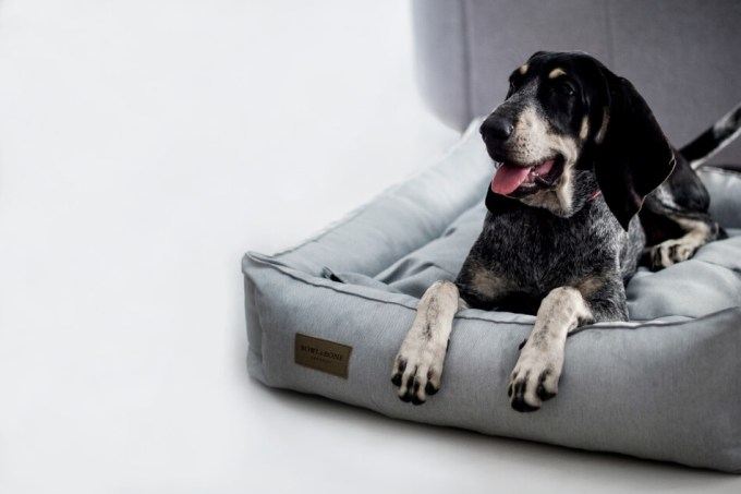 bed chien bowl and bone