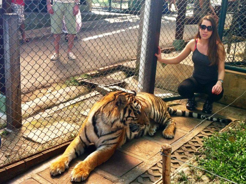 Jaula de tigre, zoológico de tigres em Chiang Mai
