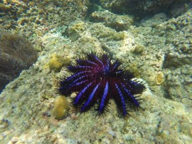 marine animals in Maya Bay, Thailand