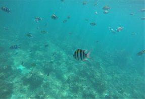 underwater Maya Bay