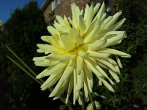 Fleur à ISO 800