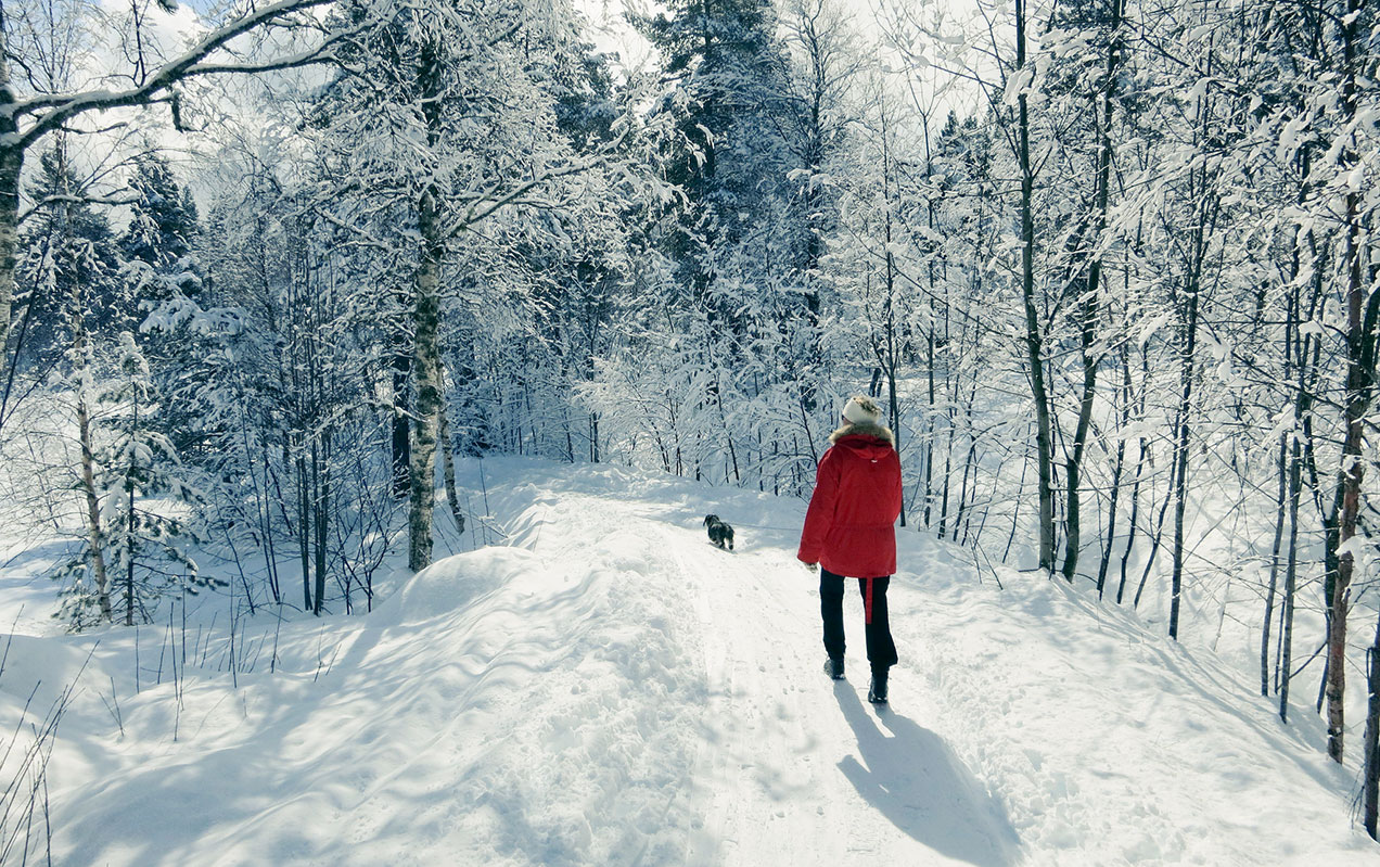 Woman in red jacket and dachshund walking in a snowy winter landscape
