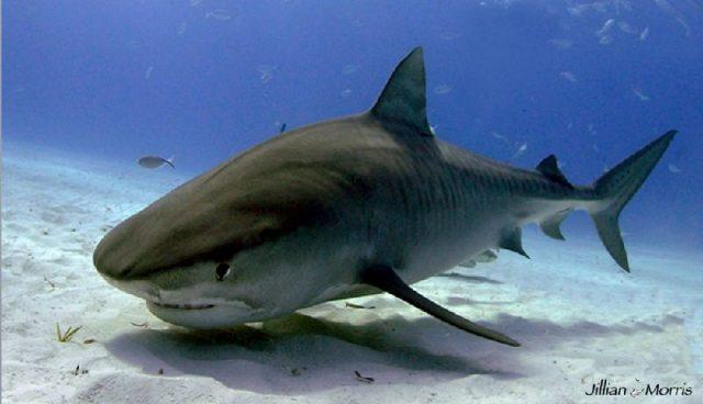 Nama Nama Ikan Laut Dan Gambarnya Terlengkap  NamaNama Hewan
