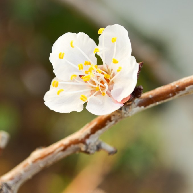 Spring Fruit Flowers Backgrounds by Terry Majamaki