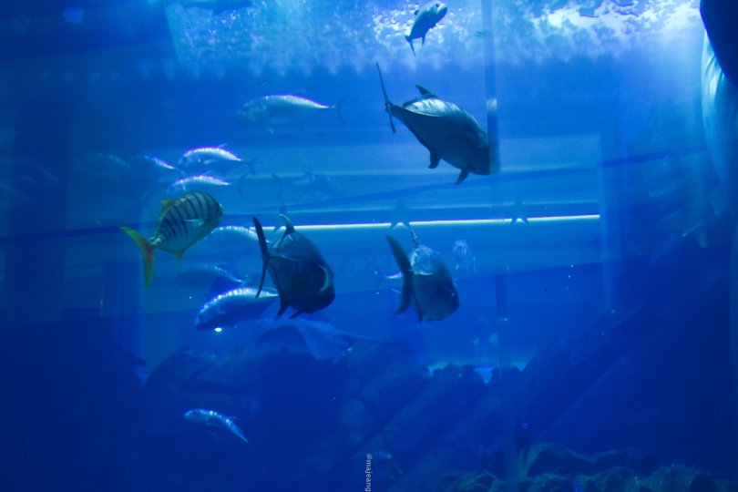 places worth seeing in Dubai - aquarium