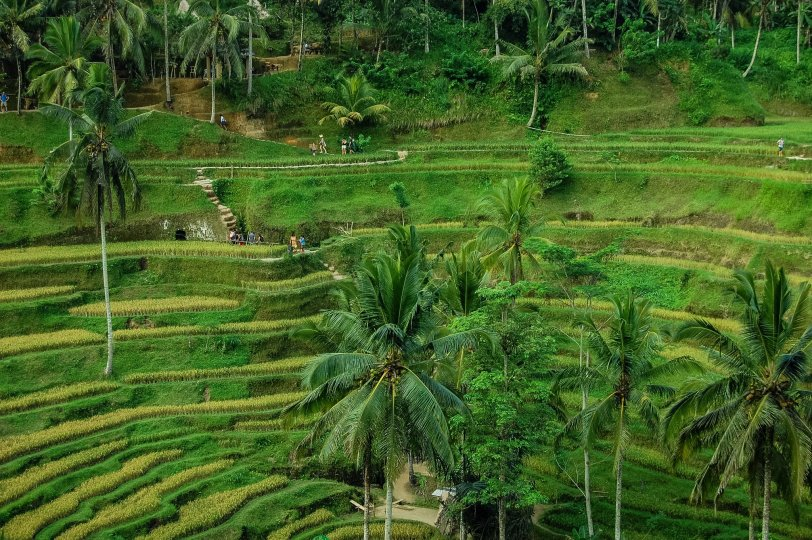 My 2020 travel bucketlist - Bali, Jatiluwah rice gardens