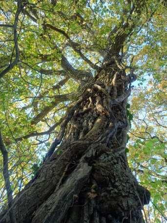 les liens de l'arbre