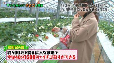 matuko-ichigo12