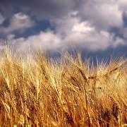 Faits et chiffres #5 – Nourrir le monde / Agriculture