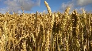 Qui est le premier exportateur mondial de blé ?