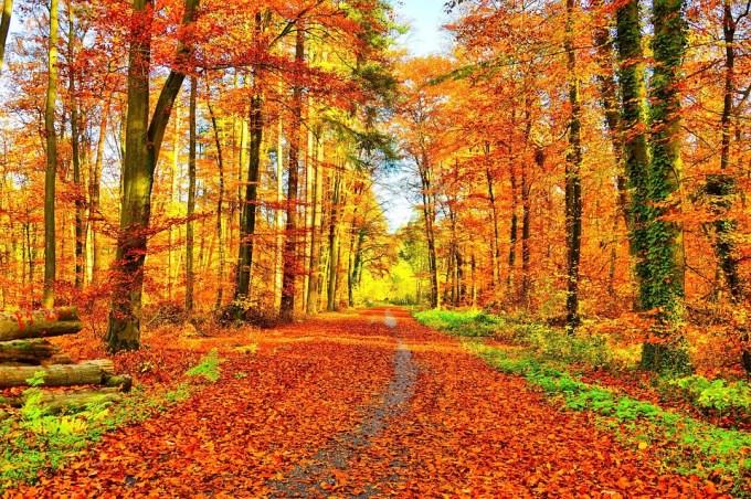 Sais-tu comment on traduit « automne » en anglais américain et en anglais britannique ?